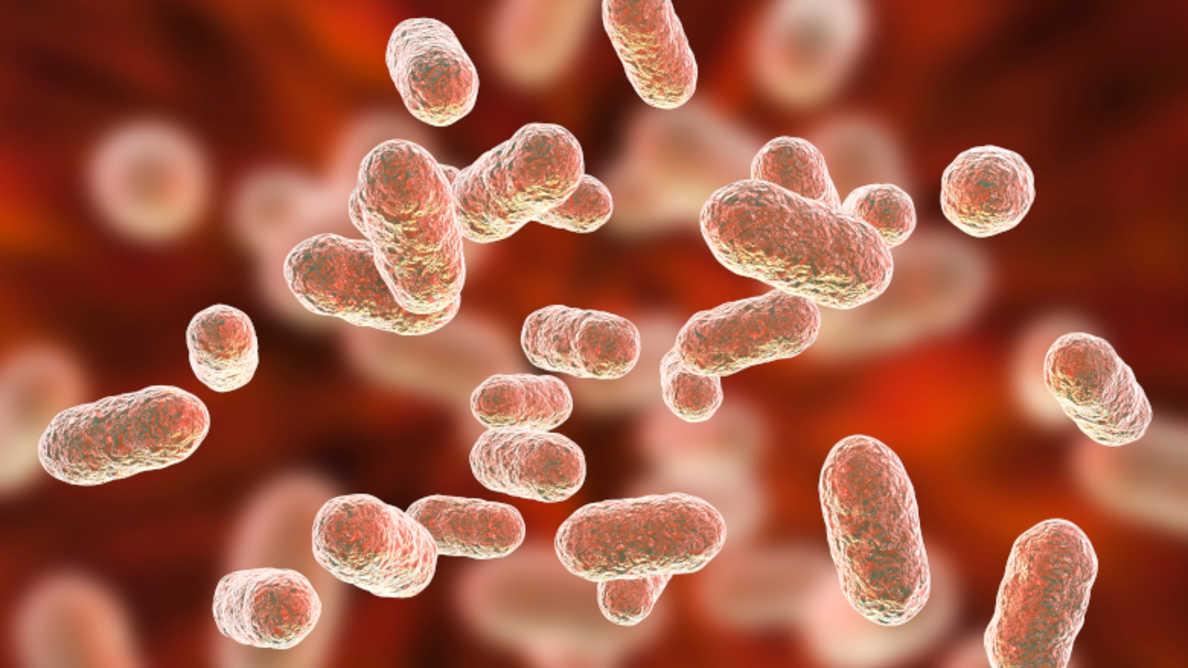Bakterie periodontálních onemocnění pravděpodobně řídí průběh Alzheimerovy choroby
